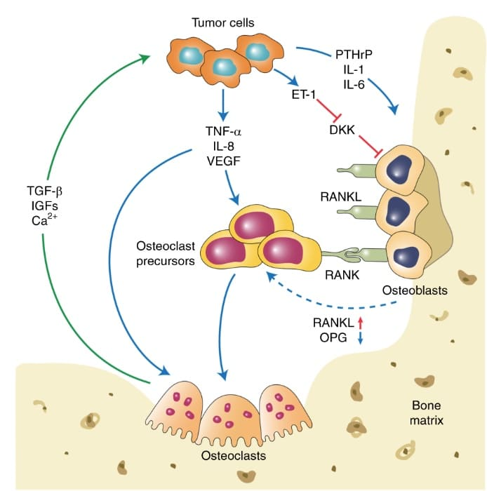 Cells Interactions
