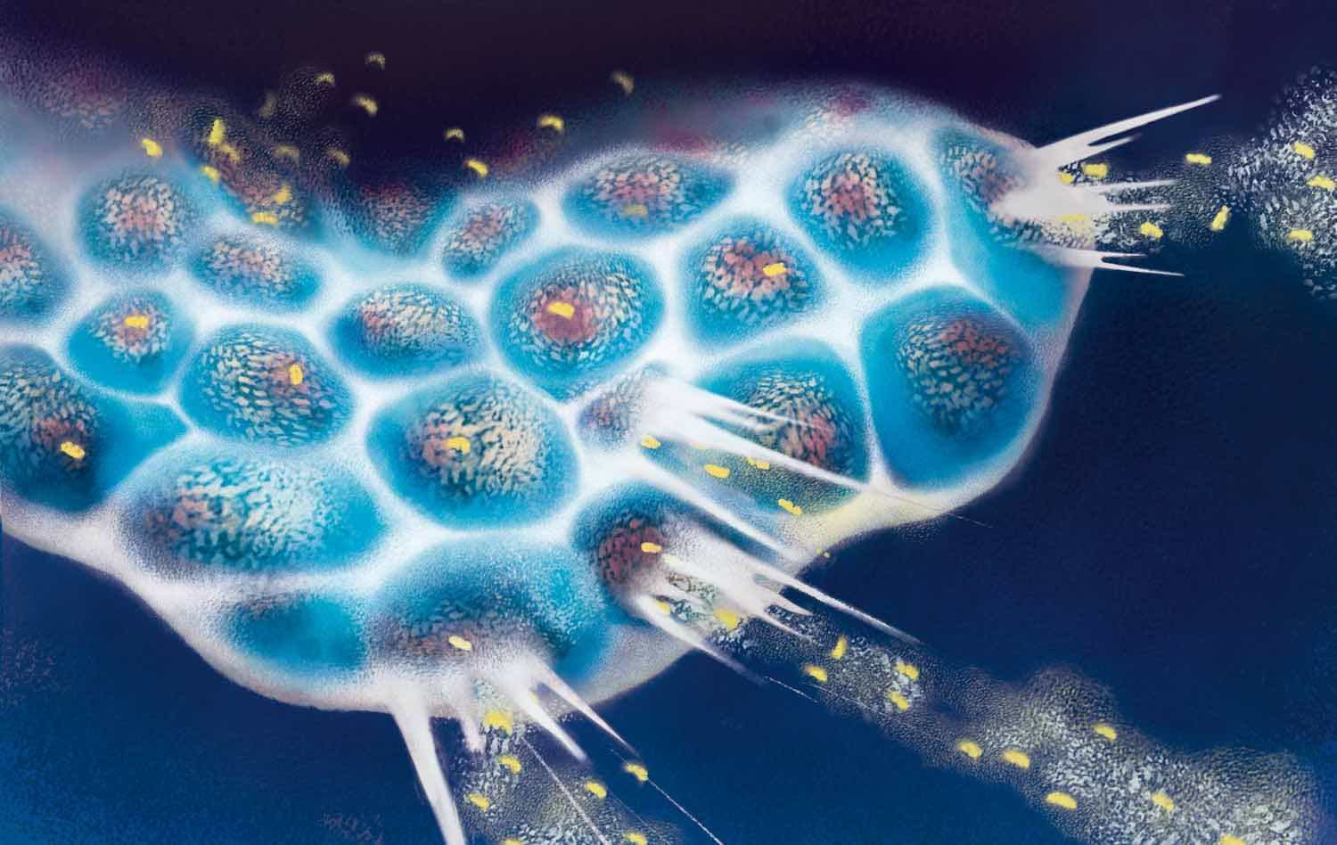 Oncolytic viruses – a new wave of therapeutic possibilities
